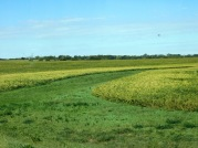 I believe the yellow is soybeans; I guess the green is pasture or?? But why?