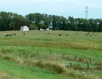 """This is the definition of the term """"pastoral scene""""."""