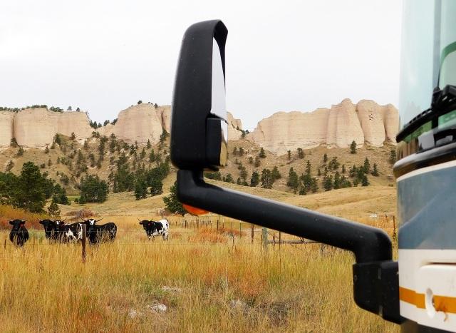 2019-9-27cb curious cows