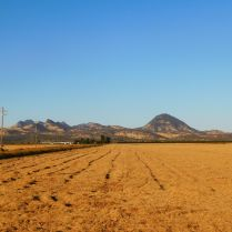 This was a field of green rice on our last trip to Gridley but has since been harvested.