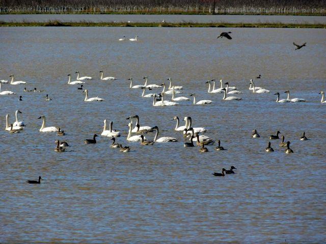 2019-12-26e rice paddy birds
