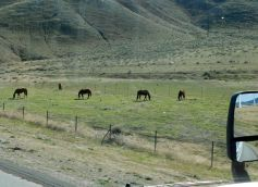 Just a pretty picture of grazing horses along CA58 near the Tehachapi summit.