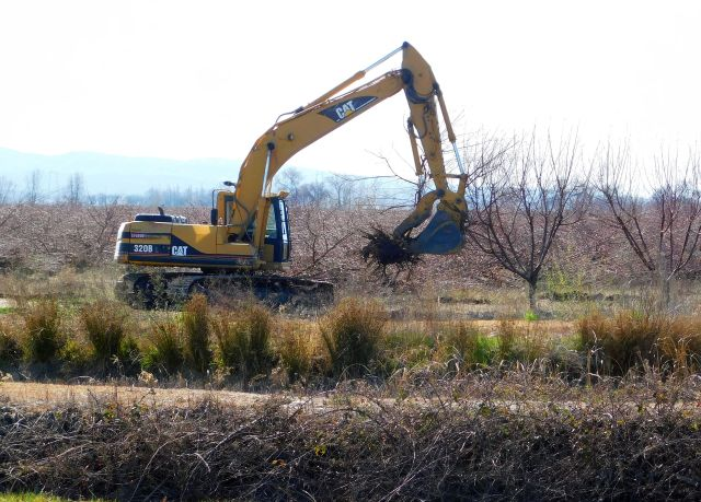 2020-2-27i orchard removal