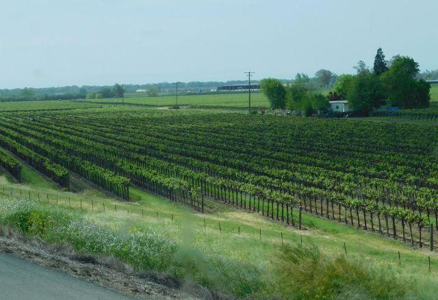 2020-4-17h vinyard
