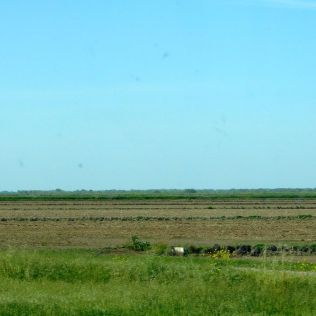 These are the rice paddies that were flooded during the winter, but are now dry and will soon be sprouting rice.
