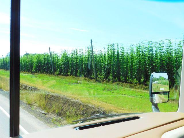 2020-6-19b hop crop