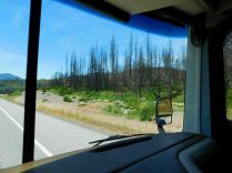 Thousands of acres were burned a year ago or so along I-5 north of Redding. Sad.