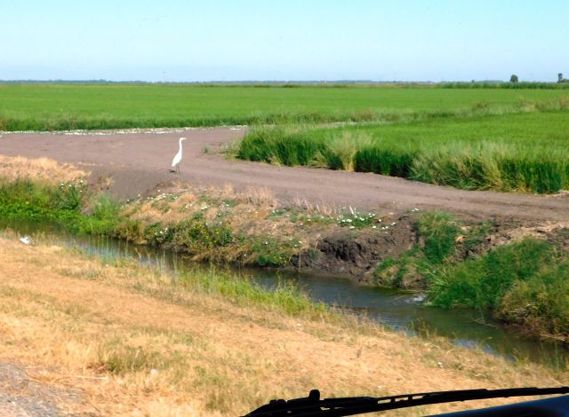 2020-8-13a Rice country along CA162