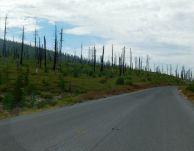 An ugly reminder of the devastation forest fires leave behind.
