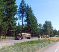 Logging trucks in Oregon - imagine that!