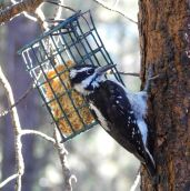 And a woodpecker paid a visit.