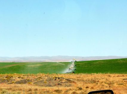 Automatic irrigation at work.
