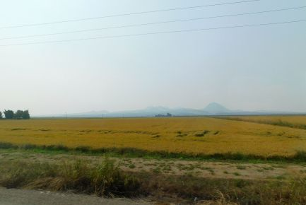 Here rice paddies are drained and drying, and soon would be harvested.