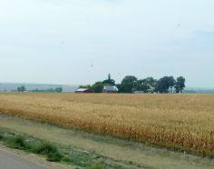 One of many corn fields along I-25.