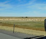 Just a reminder: Wyoming is serious cattle country.